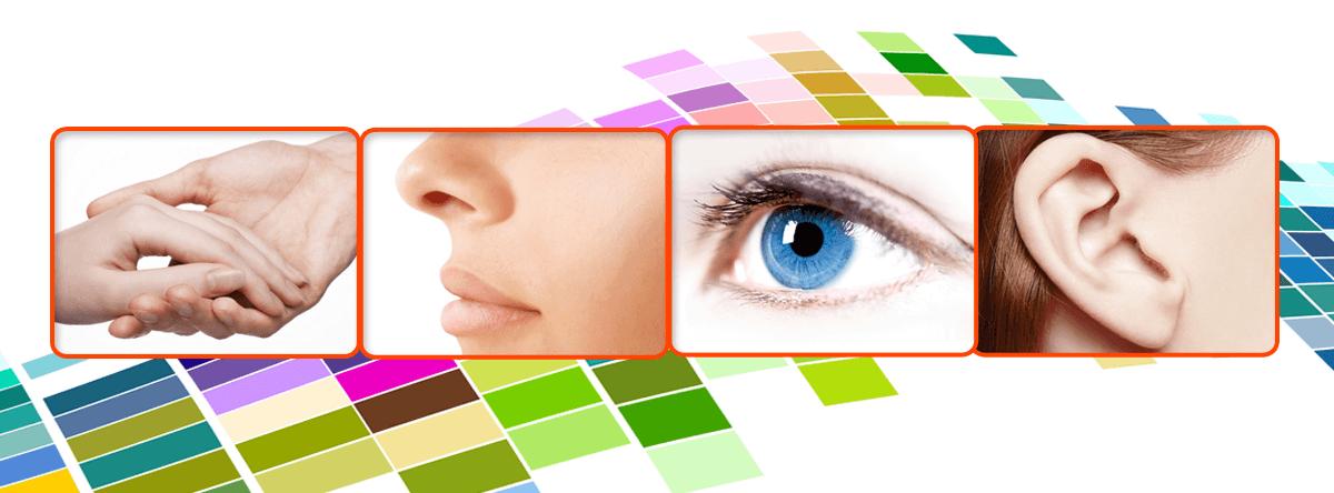 Как за 5 минут в день развить 5 чувств и улучшить восприятие информации